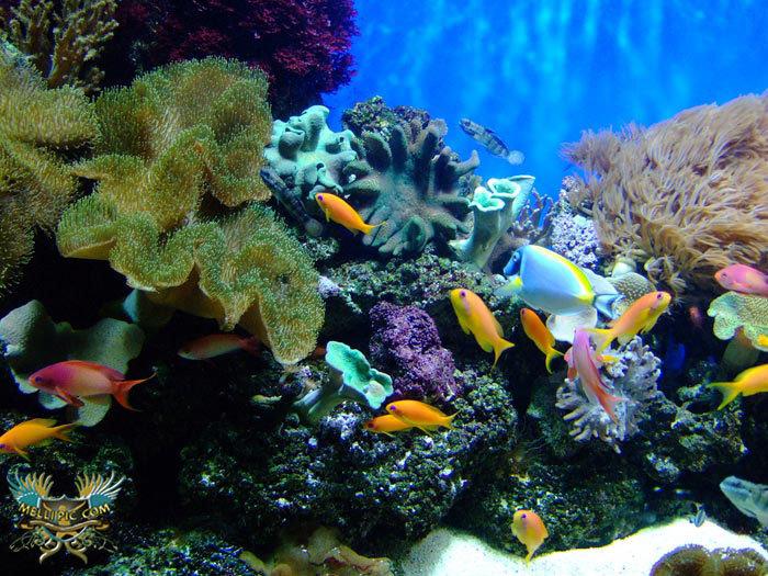 ردپای کرونا در آبزیان دریاییهم پیدا شده است