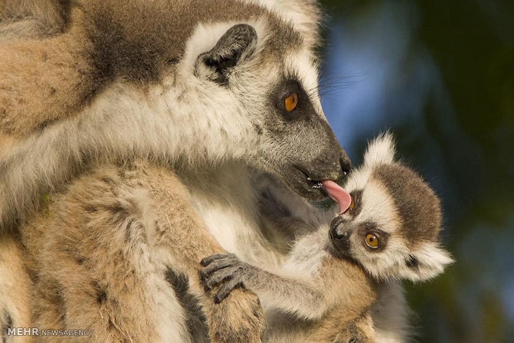 گلچین عکس های حیوانات و عکس های خبری هفته گذشته جهان