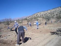 اجرای طرح احیای جنگلهای بلوط درپارک ملی دنا/ کاشت ۲۰۰ کیلوگرم بذر بلوط
