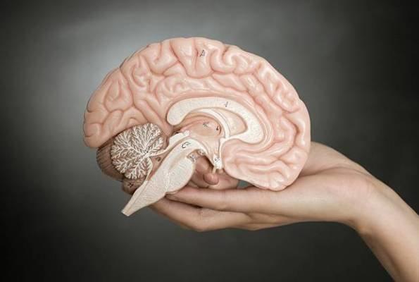 رابطه ذهن و مغز
