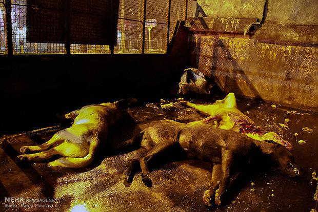 کشتار سگ ها و آتش زباله ها/ ایجاد کانون آلودگی در شهر
