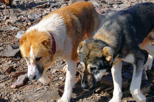 درخواست دوستداران حیوانات برای مجازات عاملین سگ کشی اخیر شیراز