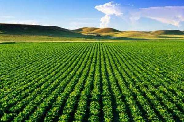 رونق تولید محصولات کشاورزی بعد از انقلاب در ایلام/اشتغال ۳۰ درصدی مردم