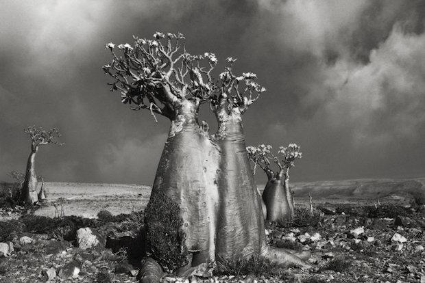 درختان قدیمی