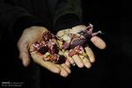 دزفولی ها از مصرف گوشت کبوتر و گنجشک خودداری کنند