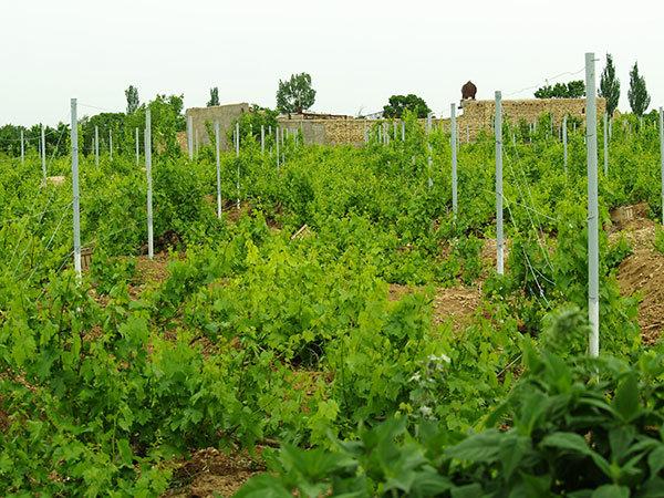۸۶۰ هزار هکتار زمین در کشوربرای احداث باغ اولویت بندی شده است