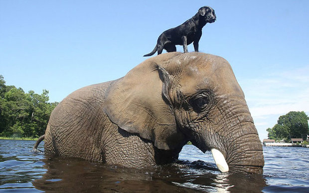 unusual-animal-friendship-55__700.jpg