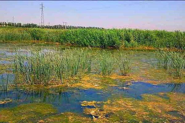 سطح آب تالاب جازموریان تغییر کرد