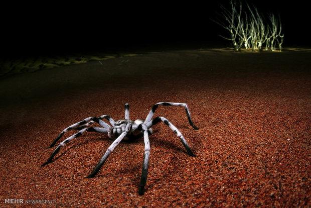 تنها نیم میلیون از گونه های حیات وحش جهان بررسی شده اند