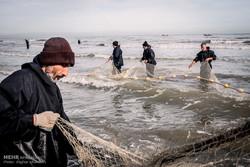 ۲۰ تن ماهی استخوانی در رودسر صید شد