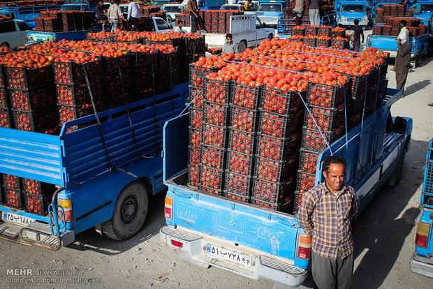 بحران گوجه فرنگی حاصل پشت میز نشینی مسئولان است
