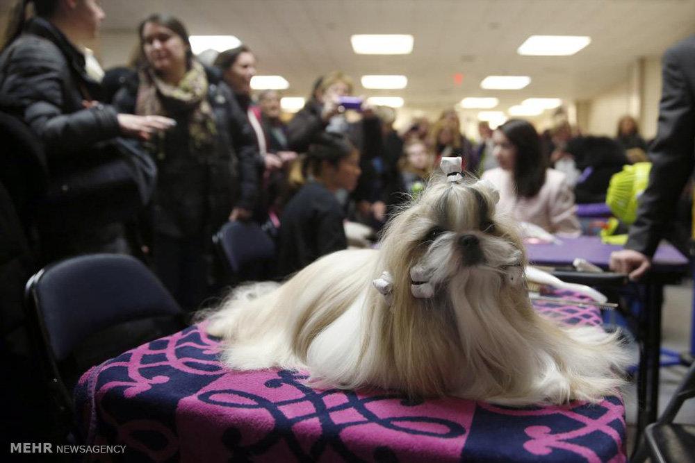 مسابقه سگ های نمایشی