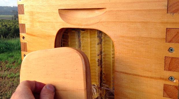 honey-on-tap-flow-hive-stuart-cedar-anderson-3.jpg