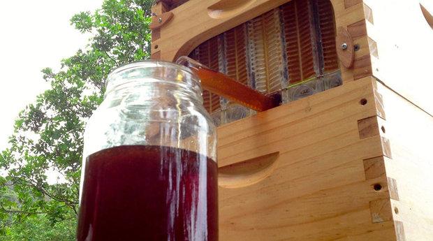 honey-on-tap-flow-hive-stuart-cedar-anderson-5.jpg