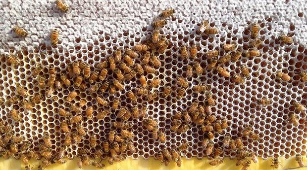honey-on-tap-flow-hive-stuart-cedar-anderson-7.jpg