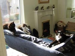 خانه سالمندان گربه ها