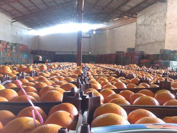 صادرات مازندران به ۱۶۵ میلیون دلار رسید/ ضایعات ۱۰۰ هزارتن پرتقال