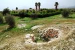 باغ پرتقال در شهر بیشاپور
