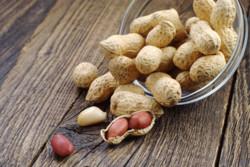داروی حساسیت به بادام زمینی تولید شد