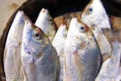 صید ماهی با گرگور در قشم
