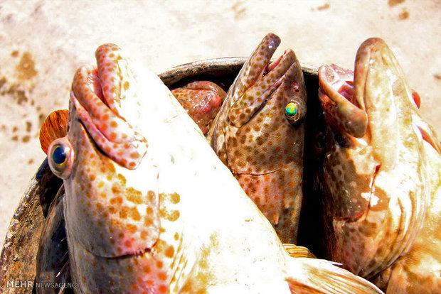 برگزاری نشست تخصصی وضعیت ماهی قزل آلای خال قرمز در منطقه لار