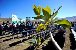 روز درختکاری و كاشت نهال در كرج