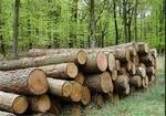 ۳۰سال دیگر جنگل از ایران حذف می شود/ نیاز درختان به تنفس مصنوعی