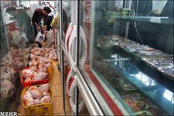 ۵۰۰ كيلو گوشت غير بهداشتی در تاكستان کشف و معدوم شد