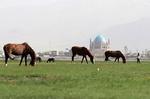 حفر چاه های آب غیرمجاز از عوامل مهم تخریب چمن سلطانیه است