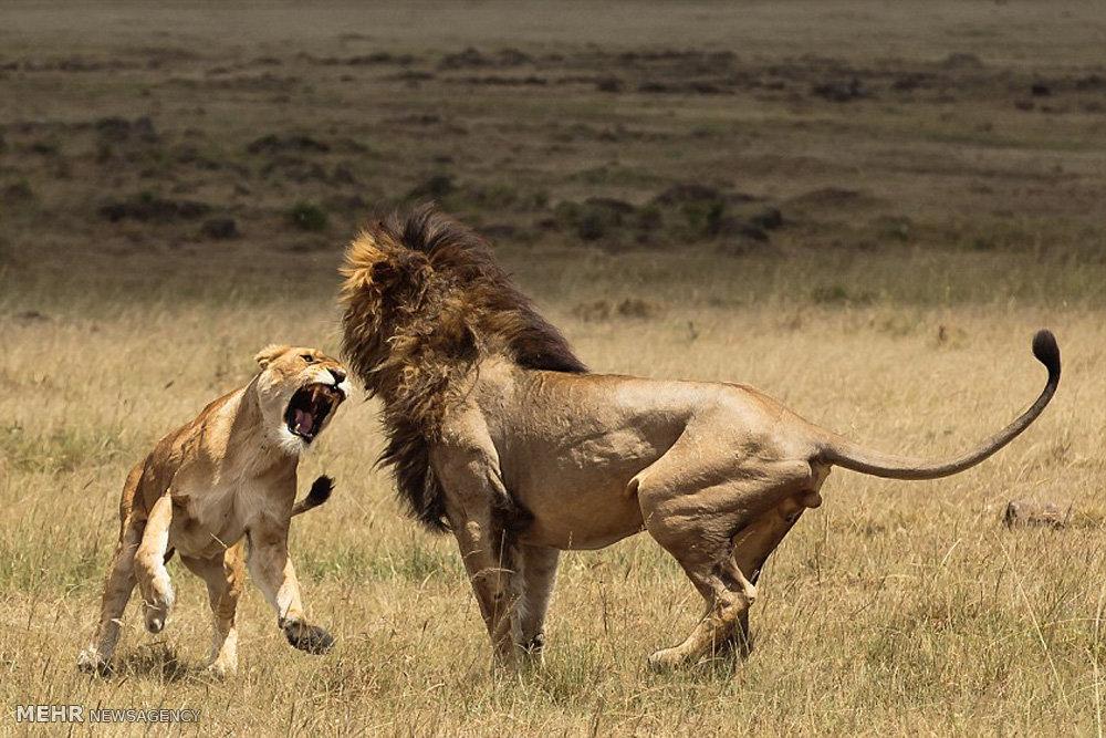 درگیری سلطان با همسرش