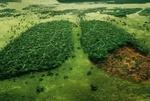 تنش آبی پوشش گیاهی کشور کاهش یافت/ وضعیت سبزینگی در سطح کشور
