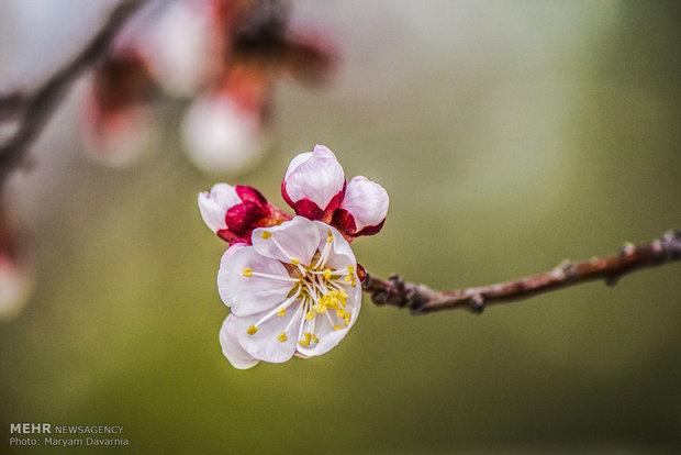 طبیعت بهاری بجنورد