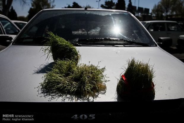 سبزی عید یا اسراف دو هزار تن گندم در هر سال