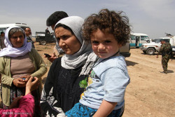ئاماری ئێزدییەکانی قوربانیی جەنایەتەکانی داعش