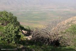 مقابله با خشکیدگی درختان بلوط زاگرس