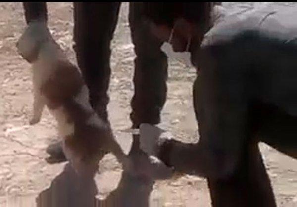واکنش شهرداری تهران به سگ کشی