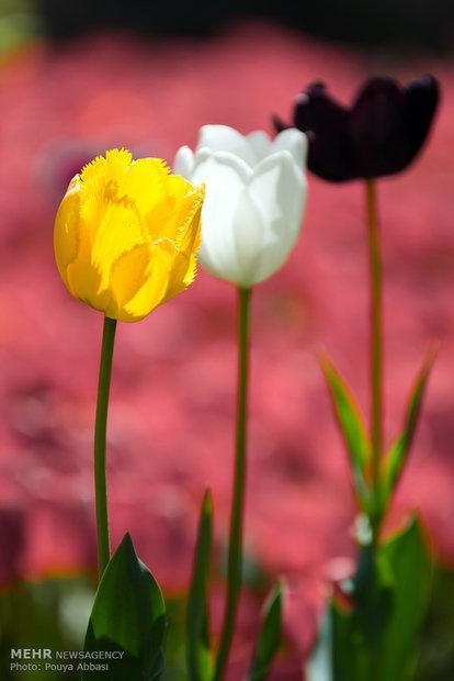 طبیعت بهاری منطقه ارس