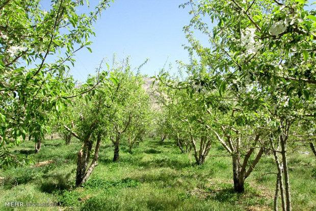 وضعیت باقیمانده سموم در سفره غذایی مردم/ بررسی۲۴نوع محصول کشاورزی