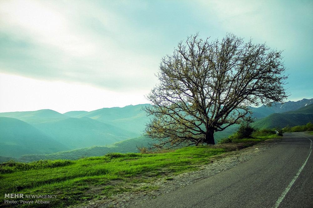 عکس های خاص گلشیفته فراهانی