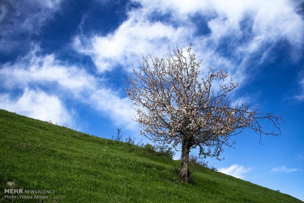 طبیعت بهاری کلیبر