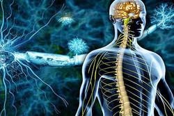 شناسایی ۱۳۵۷ بیمار مبتلا به «اماس» در همدان/ مراقب اعصابتان باشید