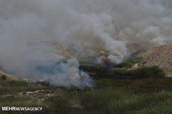 بیشهزار تالابی کنگان در آتش سوخت/ حریق در مجاورت خط انتقال گاز