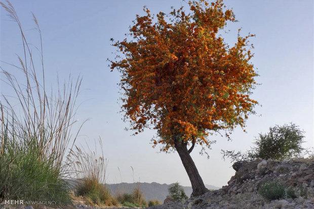 باغ درختان سمنگ