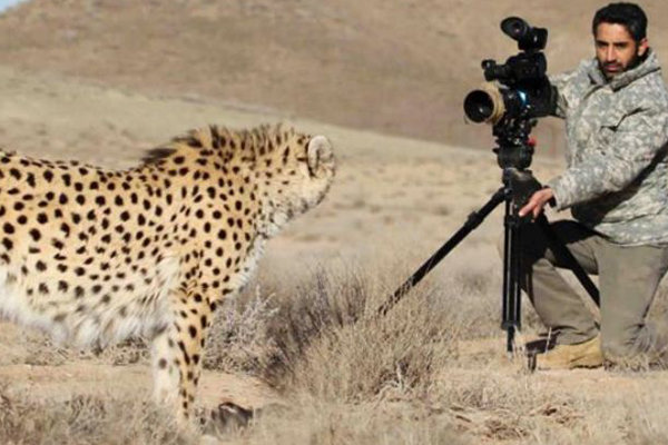 Asiatic cheetah fine almost 16-fold - Mehr News Agency