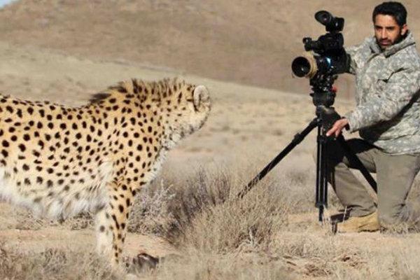 مسئولیت حقوقی و بین المللی دولت در انقراض یوزپلنگ ایرانی