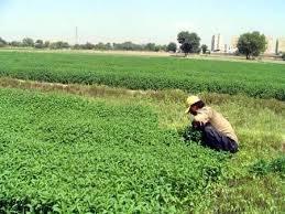 کشت سبزی و محصولات جالیزی با آب رودخانه کمبل ممنوع است