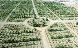احداث «کمربند سبز» به جای حبس برای متخلف تصرف اراضی ملی در لرستان