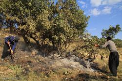 آماده باش برای اطفای حریق جنگل ابر/ مسئولان در کانون حادثه هستند