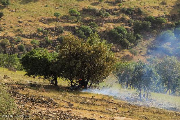 آتش سوزی جنگل ها و مراتع مله کوه  رومشگان