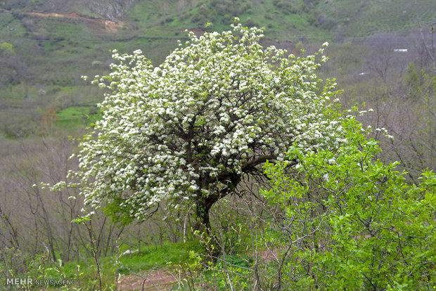 طبیعت بهاری  اشکورات رودسر